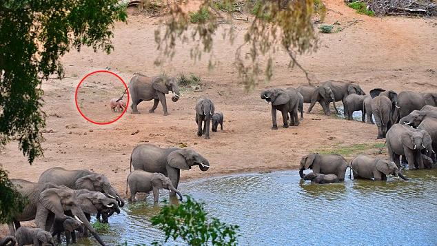 Mitten auf Safari sieht ein Mann eine wundervolle Szene