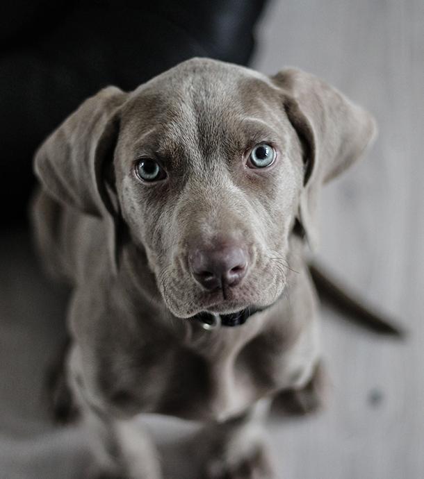 Weil Familie die Behandlung nicht zahlen kann: Tierarzt will Hund einschläfern