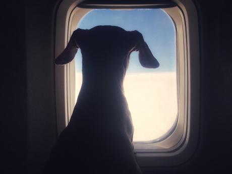 Diese Hunderassen darfst du auf gar keinen Fall mit ins Flugzeug nehm…