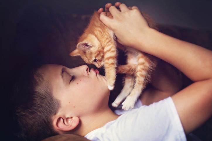 Mit diesen Tricks wird auch deine Katze zur Schmusekatze!…
