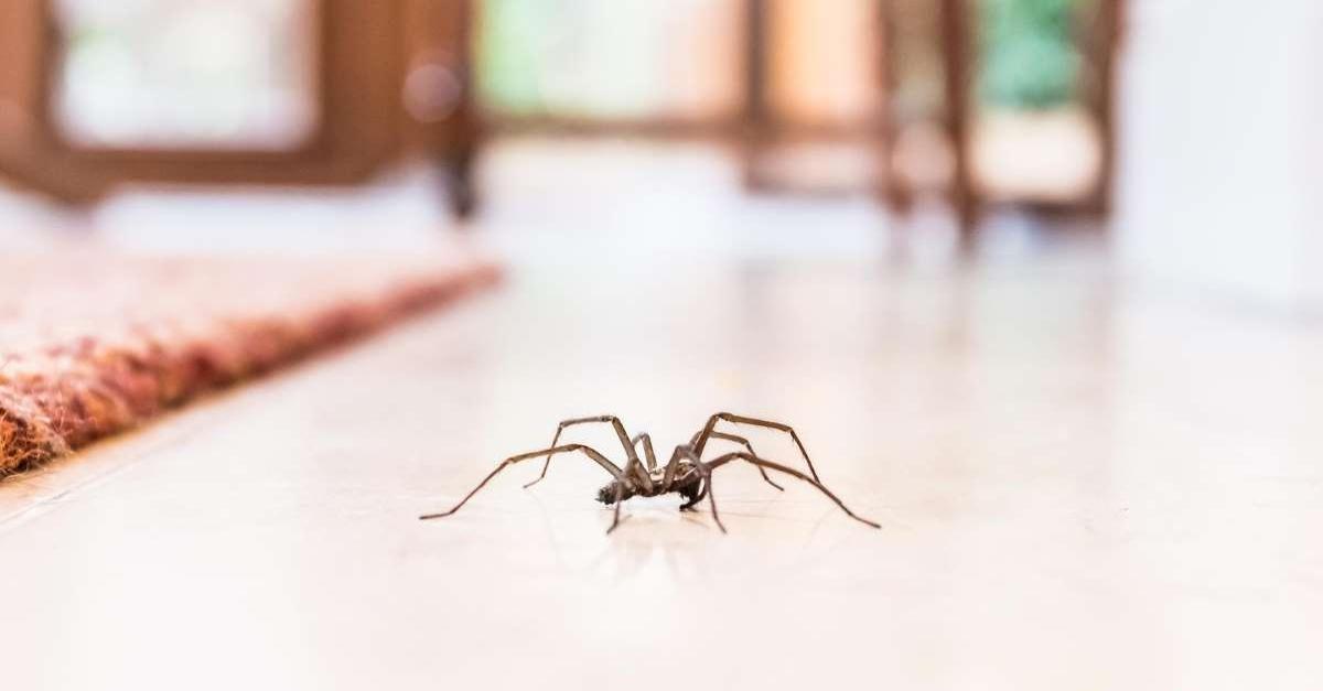 Darum krabbeln Spinnen immer um 19:35 Uhr in deine vier Wände