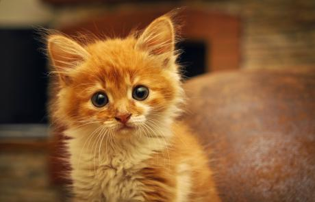 Katzenbabies: 10 Tipps für den perfekten Start im neuen Zuhause…