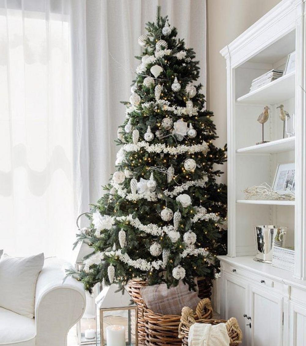 Der beliebteste Weihnachtsbaum in Deutschland ist die Nordmanntanne