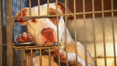 Mann will Hund vor Misshandlung schützen, dann hetzt Halter den Hund auf ihn