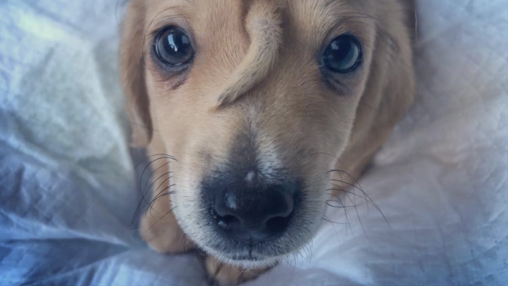 Einhorn-Welpe: Dieser ausgesetzte Hund ist total magisch