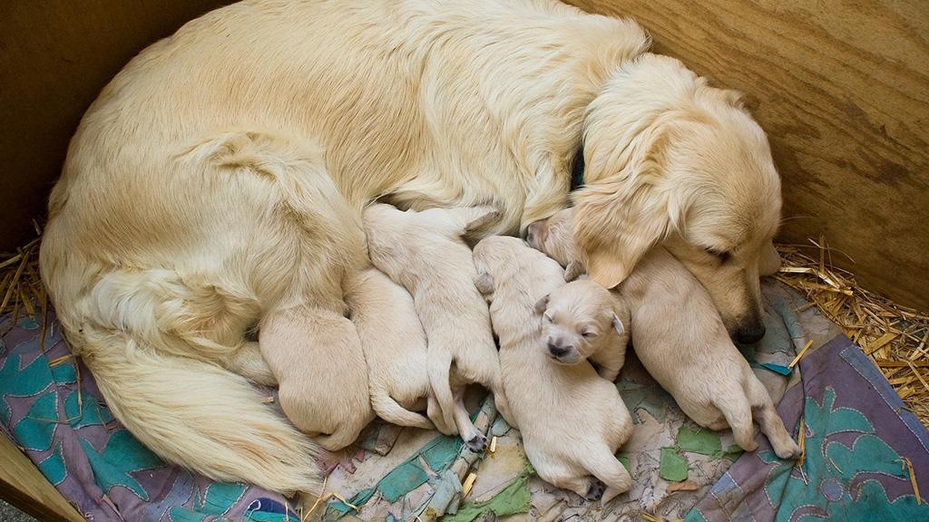 Hunde-Mama füttert Welpen, doch plötzlich bewegt sich das Tier nicht mehr