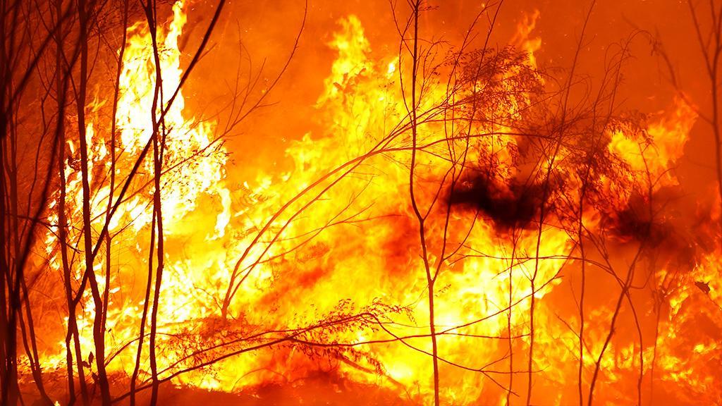"""""""Australia is on fire"""": So helfen australische Stars ihrem Heimatland"""
