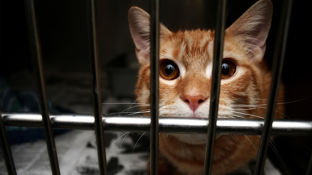 Katze verliert ihre Kitten: Doch im Tierheim wird ihr eine zweite Chance gegeben