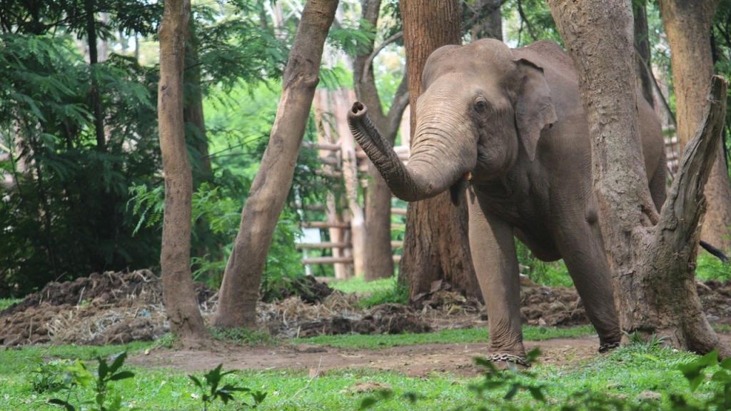 Elefant rammt Elefantenstatue um: Darum ist er so wütend