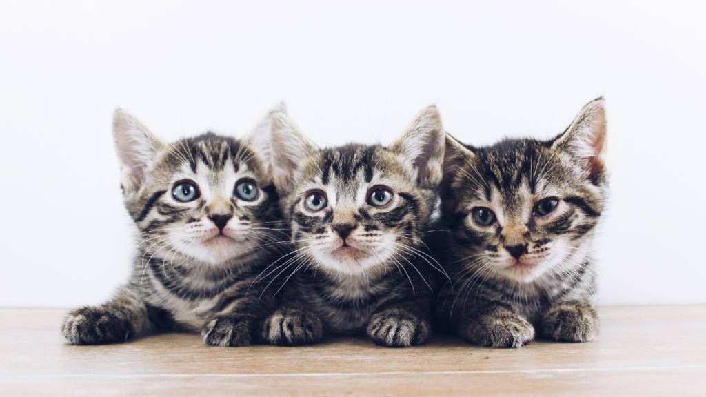 Mann rettet 19 Katzen: Dann beruhigt er sie mit Musik (Video)