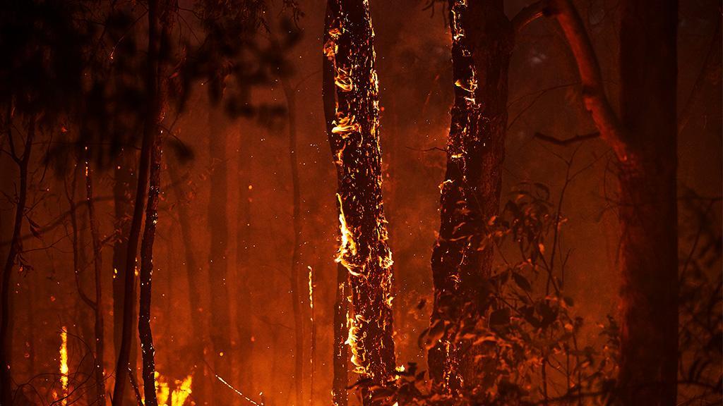 Bewegende Rettung: Frau rennt in brennenden Wald, um ein hilfloses Tier zu retten