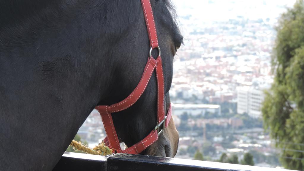Seit 14 Jahren: Pferd spaziert jeden Tag alleine durch Frankfurt