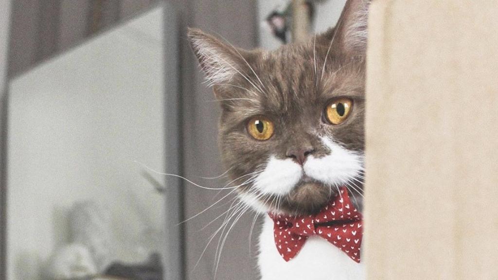 Kater Gringo begeistert mit seinem natürlich gewachsenen Dandy-Schnurrbart