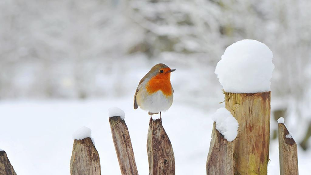 So bringt ihr die Tiere in eurem Garten gut durch den Winter