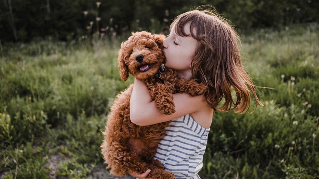 Hunde: Diese Rassen sind am kinderfreundlichsten