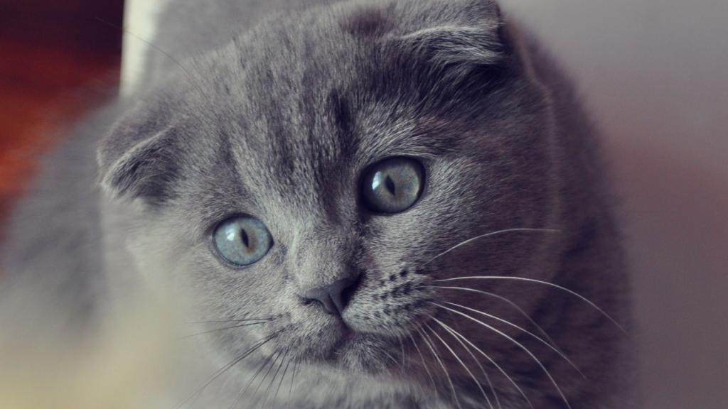 Katze: Die schönsten Rassen der Welt