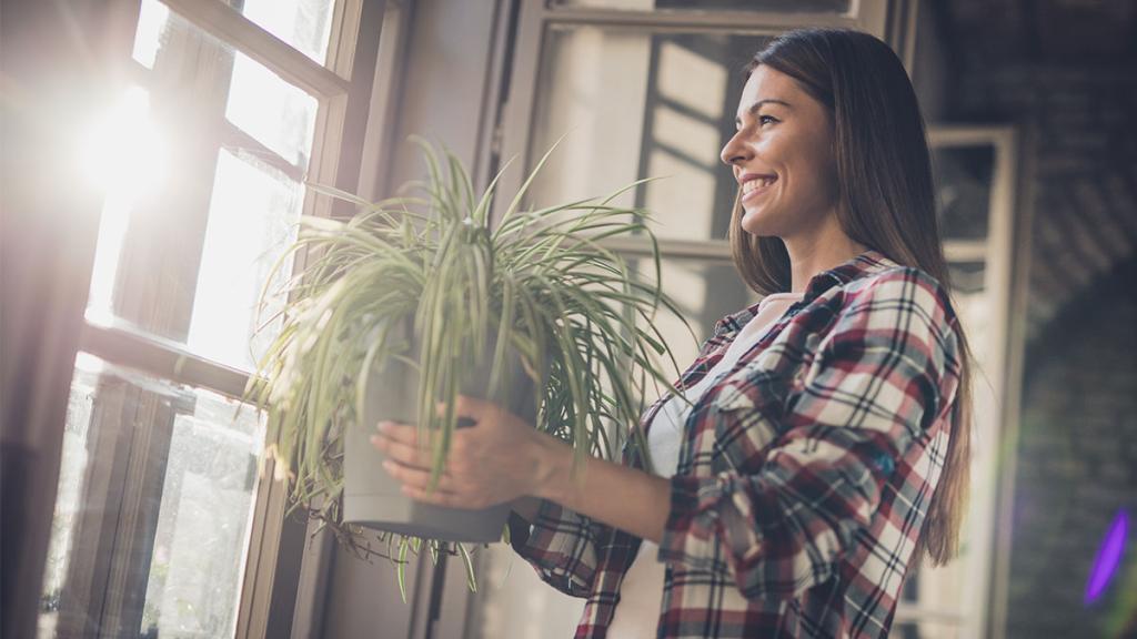 Pflanzenfan aber kein grüner Daumen? Dann sind diese Gewächse perfekt für dich!