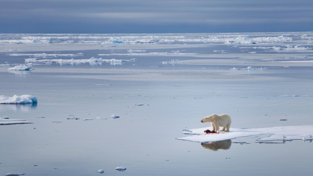 Umweltschutz im Alltag: 15 Dinge, die jeder gegen den Klimawandel tun kann