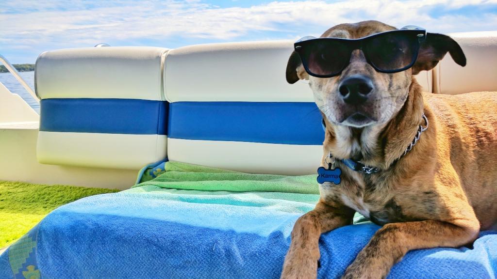Tierärztin deckt Irrglauben auf: So kühlt man Hunde im Sommer ganz und gar nicht ab