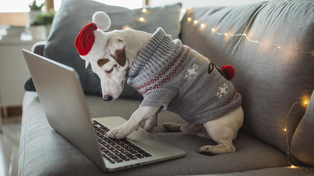 Petfluencer: Wenn der Hund zum Influencer wird