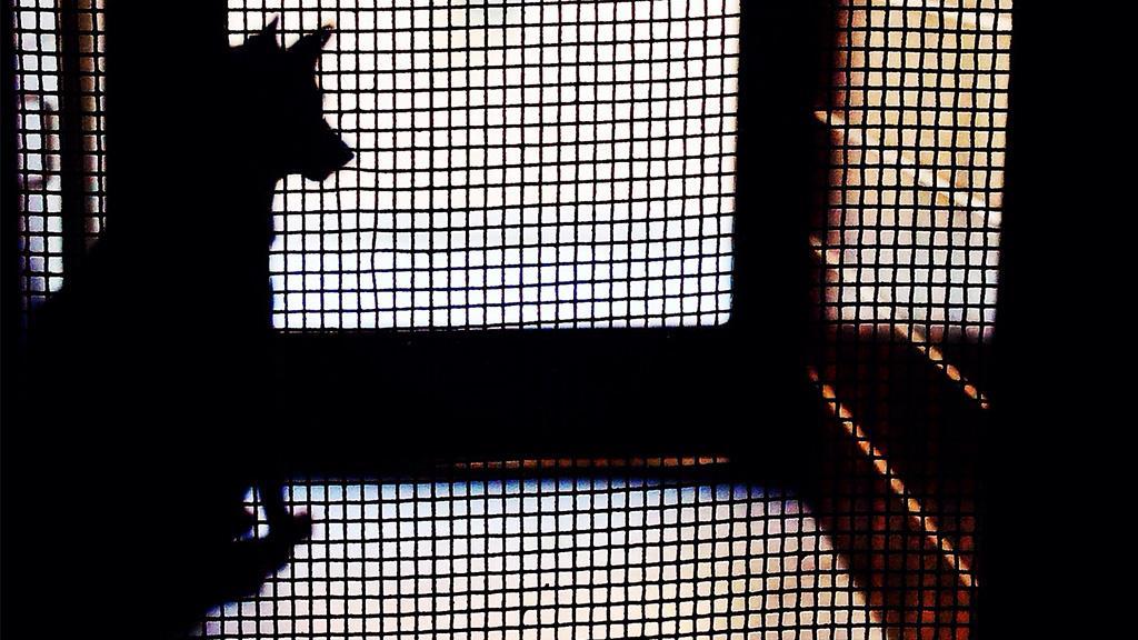 Aus rührendem Grund: Mann fragt im Tierheim nach Hund, den keiner haben will