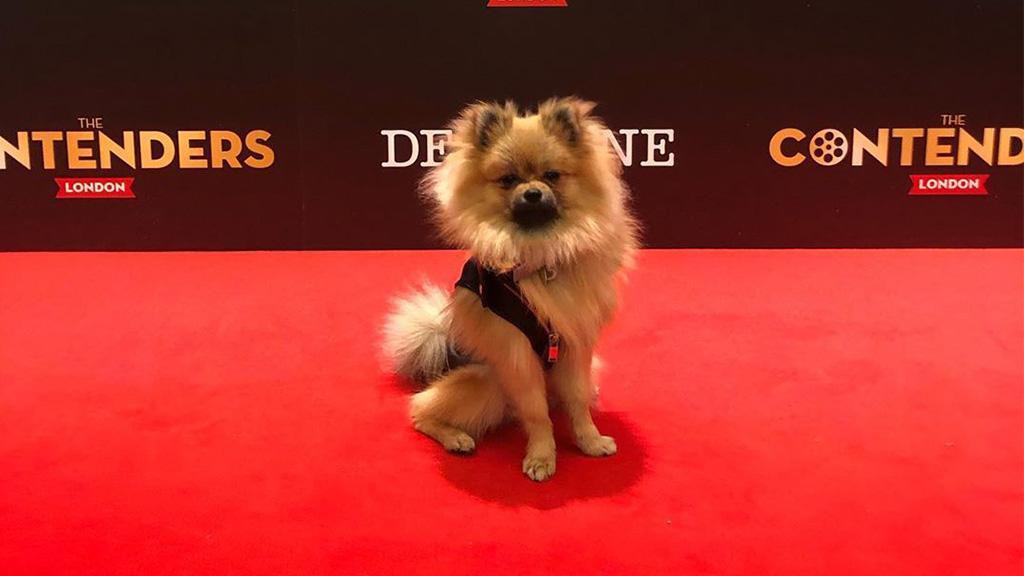 Burly Bear: Wie ein kleines Fellknäuel den Hollywood-Stars die Show stiehlt