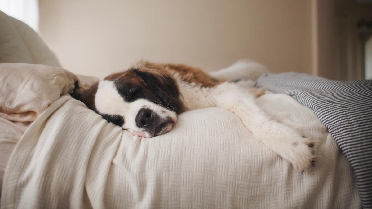 Er Trägt Sie Ihn Bett