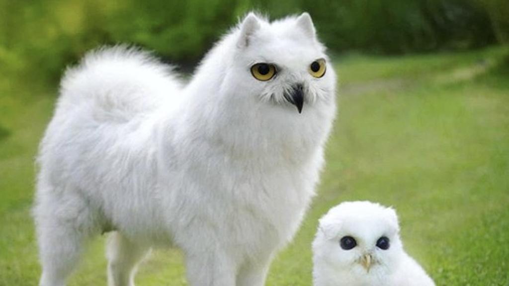 Kreuzungen von höchst unterschiedlichen Tieren: Diese Tier-Hybride sind ein Kunstwerk