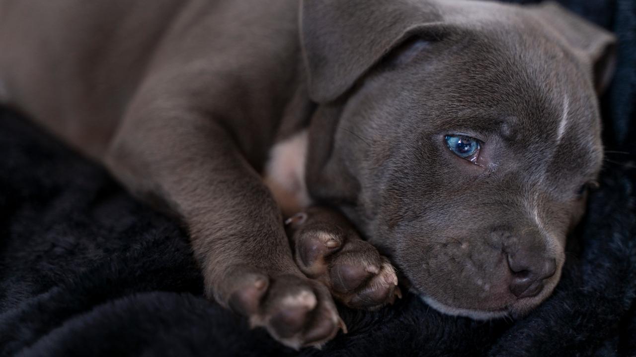 Nach zwei Schicksalsschlägen weint dieser Hund bitterlich