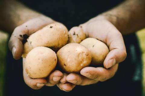 Kartoffel-Allergie: Symptome und wie sie ausgelöst wird