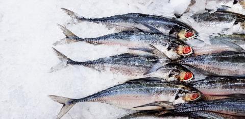 Wie lang hält Fisch im Tiefkühlfach?