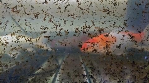Aquarium zwei Jahre nicht gereinigt: Doch dann kommt eine unglaubliche Entdeckung