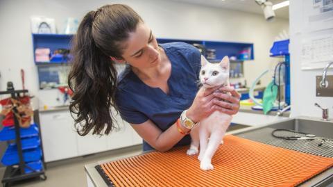 Covid-19: Britische Mutation bei Katzen und Hunden nachgewiesen