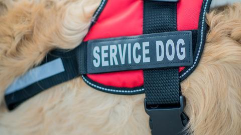Getöteter Therapiehund: Vor Gericht muss Täter sich wegen Sachbeschädigung verantworten