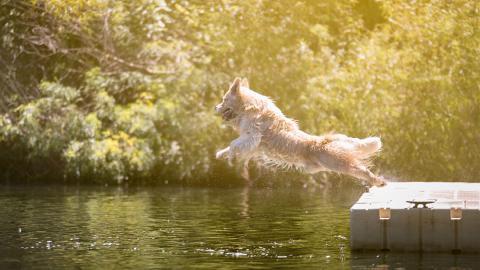 Hund will sich im Teich erfrischen, doch dort lauert eine überraschende Gefahr