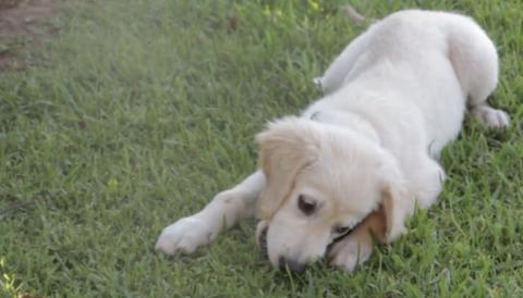 Glück auf vier Beinen: Hunde helfen gegen Herzerkrankungen