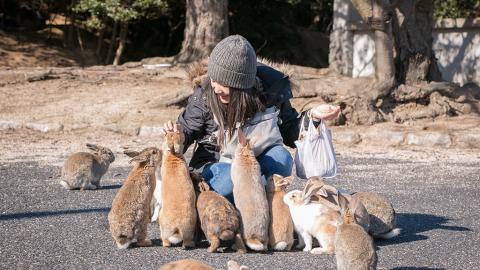 Tierschutz-Aktivistin will Kaninchen retten, doch dabei begeht sie einen fatalen Fehler