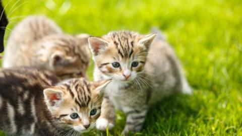 Acht Fragen, die ihr euch stellen solltet, bevor ihr eine Katze adoptiert