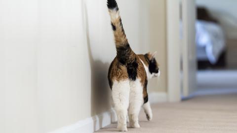 Warum dir deine Katze so gern ihren Hintern zeigt