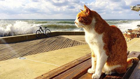 Die Katze starrt jeden Tag ins Meer - der Grund macht die Zuschauer fassungslos