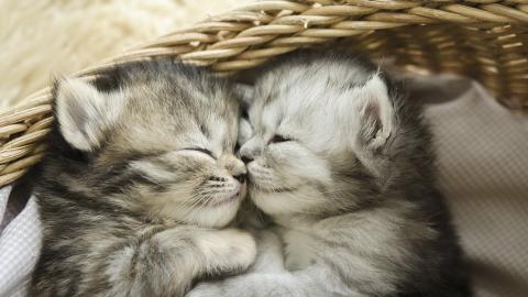 Sie findet verlassene Kitten und will Hilfe suchen: Als sie über die Schulter blickt, traut sie ihren Augen kaum