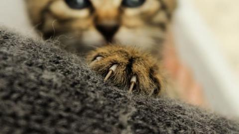 Soll man Katzen die Krallen schneiden?