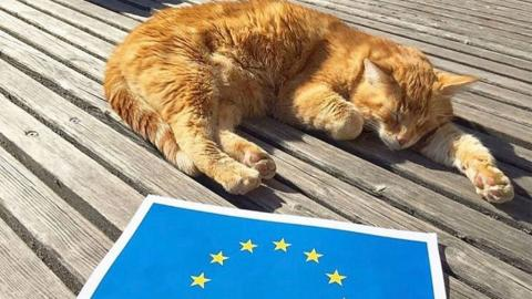 Katze soll Ehrentitel von Universität verliehen werden