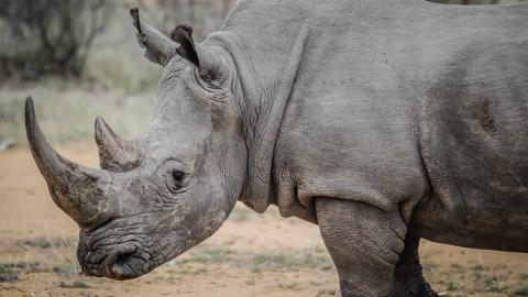 Deine Fingernägel können Nashörnern das Leben retten!