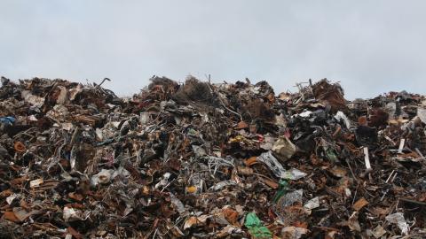 Bilderrätsel: 89 % können das Tier auf der Mülldeponie nicht entdecken