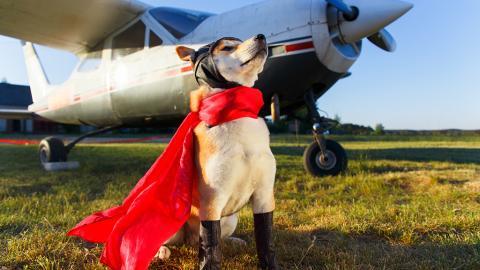 Emotional Support Animal: Wenn im Flugzeug auf einmal Tiere mitreisen