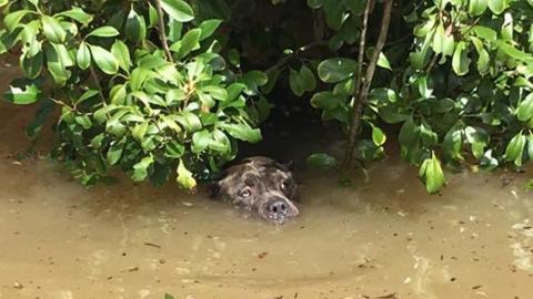 In den Fluten entdeckt er ein Paar traurige Augen: Er reagiert sofort