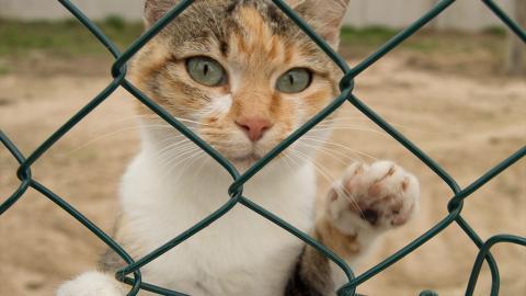 Diese Katze ist ohne jeden Zweifel die mutigste der Welt