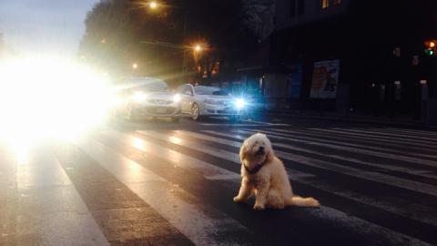 An vielbefahrener Straße: Hund rührt sich seit über 80 Tagen nicht vom Fleck