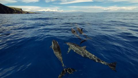 """Wahre Begebenheit: So überlebte eine junge Frau 18 Jahre alleine auf der """"Insel der blauen Delfine"""""""